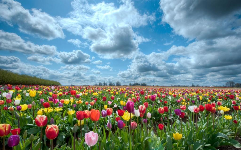 campo-di-fiori1